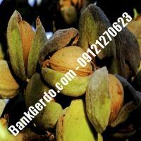 خرید فروش نهال بادام اردبیل 09121243524