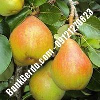 خرید فروش نهال گلابی اردبیل 09121270623